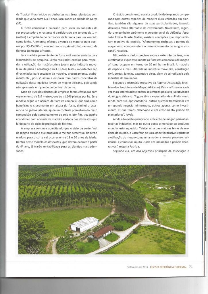 REVISTA REFERENCIA FLORESTAL - MOGNO AFRICANO-3